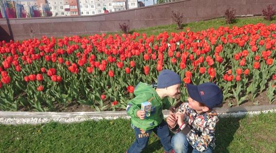 Сергей Степанов: Тюльпаны в Сургуте запаздывают, но они взойдут!